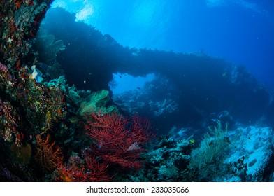 Sea fan Melithaea and sea fan Subergorgia suberosa in Banda, Indonesia underwater photo. Subergorgia has red color and Melithaea has orange color.