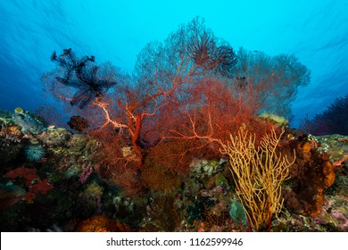 sea fan on the slope of a coral reef with visible water surface and fish