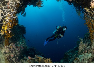 sea fan on the slope of a coral reef with a diver at depth in a cave