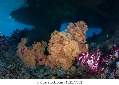 Sea fans and soft corals grow on the edge of a limestone island that receives lots of current in Raja Ampat, Indonesia.  This region is very diverse and has the world's best scuba diving.