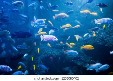 Sea fish in an aquarium