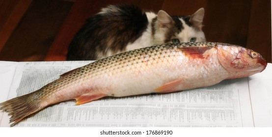 sea fish and cat