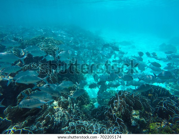 A lot sea fish and coral in andaman