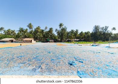 Sea fish drying on the beach of Thandwe village, near Ngapali beach, in Myanmar