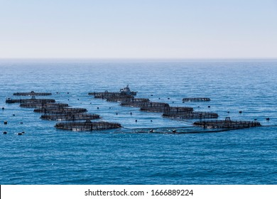 sea fish farm; marine open water fish farm; cages for fish farming dorado and seabass; the workers feed the fish a forage