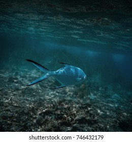 Sea fishes under water