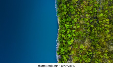 Sea and forest background