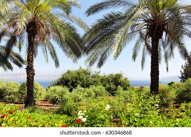 Sea of galilee landscape,Israel