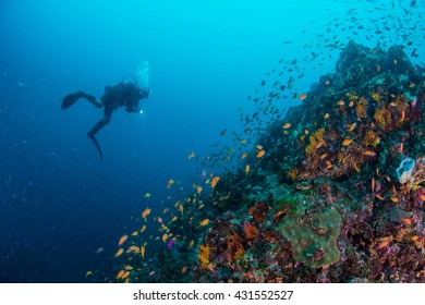 Sea goldie and diver