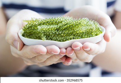 Sea grapes in heart dish on woman hand