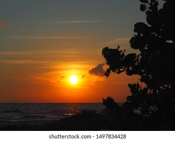 Sea Grapes Silhouette and Sunset