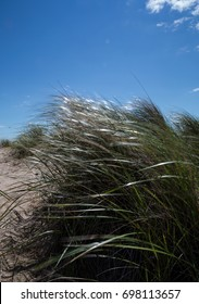 Sea grass blowing in the breeze