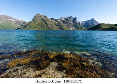 sea grass unter the water with mountain