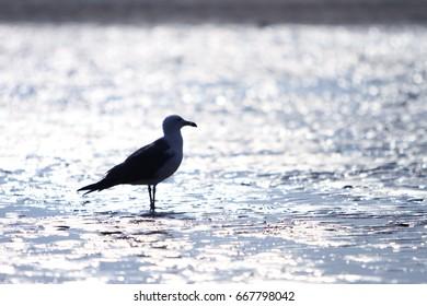 Sea and sea gull