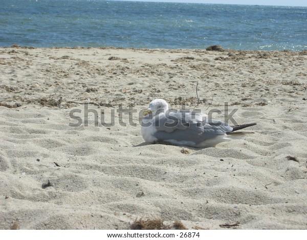 sea and gull