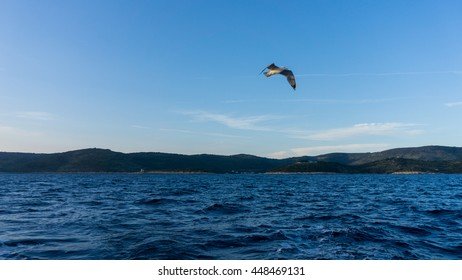 sea gull flying about the Adriatic sea