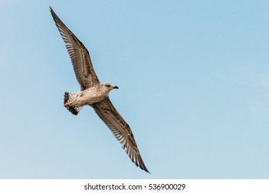 Sea gull flying lonely on a background of blue sky. Close up
