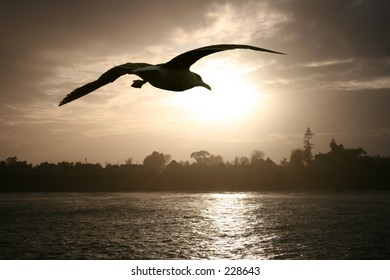 Sea gull flying over the ocean at sunset