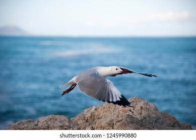 Sea gull flying over a rock in front of the blue sea