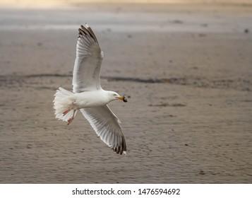 sea gull on island norderney, travel germany