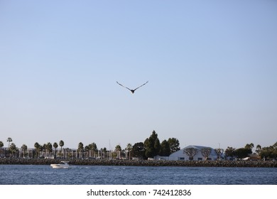 Sea Gull on Pacific Ocean