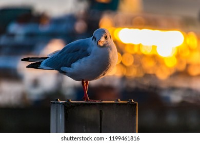 sea gull sitting on the river