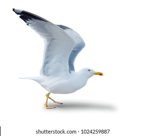 sea gull standing on his feet. seagull . Isolated over white.  the seagull flies for take-off