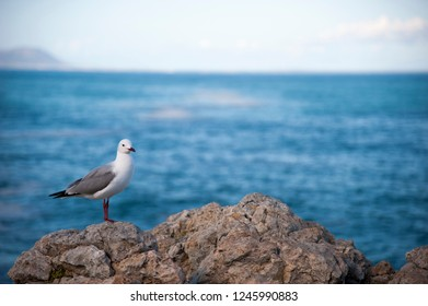 Sea gull standing on a rock in front of the blue sea