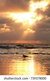 Sea gull in the sunset
