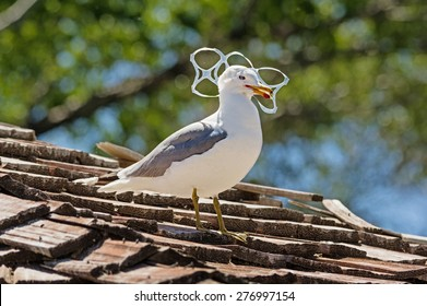 sea gull trapped in plastic six pack holder pollution