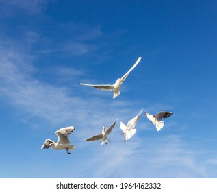 Sea gulls flying in the sky, selective-focus. Horizontal orientation.