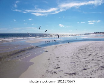 Sea Gulls at Gulf Shores, Alabama