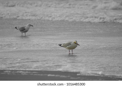 Sea gulls at North Sea beach in winter at isle Texel, the Netherlands. Europe.
