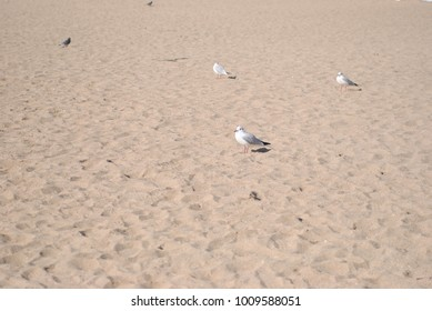 Sea gulls on the sea beach