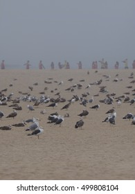 sea gulls on the beach in the frog