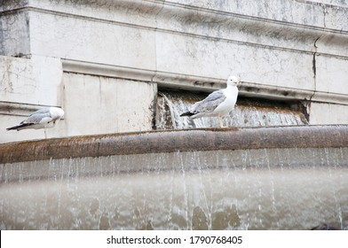 Sea gulls on fountain. Architectural water feature. Gull birds on monumental fountain. Seagulls and water spouting into stone basin.