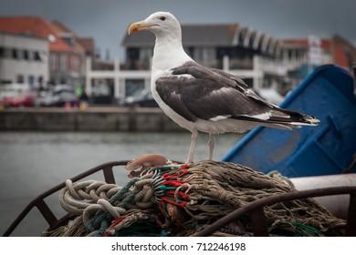 sea gulls rest