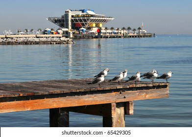 Sea gulls resting on a dock in a park with the Pier of St. Petersburg in the background.