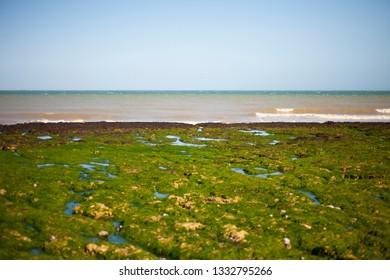 Sea horizon. Green beach. Beach with a lot of green seaweed.