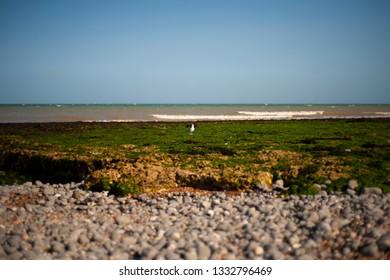 Sea horizon. Green beach. Beach with a lot of green seaweed and rocks.