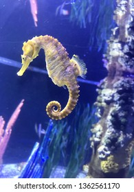 Sea horse close-up