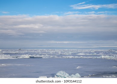 Sea Icefield in the Northern Weddell Sea, Antarctica during spring when most of the sea ice is breaking up.