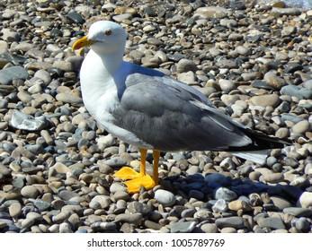 sea landscape of Italy,bird sunbathing on the beach.