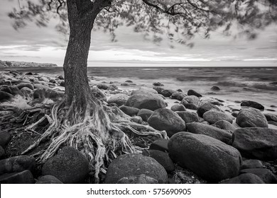 Sea Landscape With Trees And Stones Black White Ifrared Photo