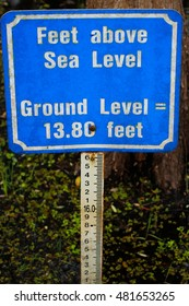 Sea level marker at 6 mile Cypress Slough, Florida