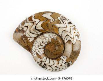 sea life fossil