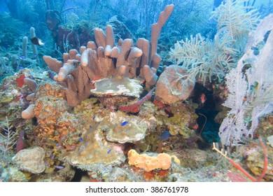 Sea life underwater at tropical coral reef