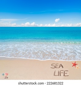 """sea life"" written on a tropical beach"