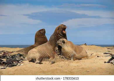 Sea Lion - Shutterstock ID 178333613