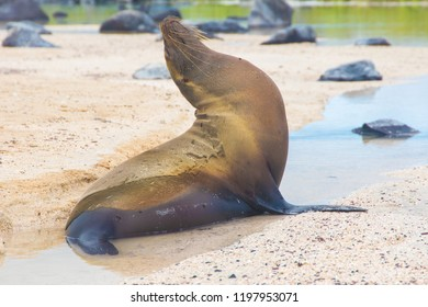 Sea lion at the beach in Galapagos